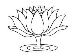 Lotus Concept School